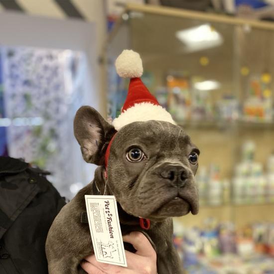 Pet Fashion Новогодняя шапочка-колпак для собак