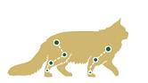 Помогает поддерживать здоровье костей и суставов у этих самых крупных кошек.