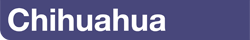 Влажный корм для собак породы Чихуахуа в возрасте с 8 месяцев
